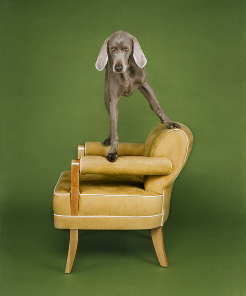 williamwegman7