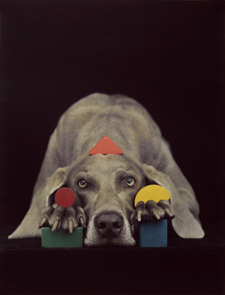 williamwegman8